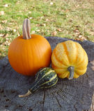 Pumpkin, squash and ornamental gourd on a tree stump Stock Photo