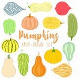 Pumpkin, squash set Royalty Free Stock Photos