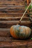 Pumpkin on stairs Royalty Free Stock Photography