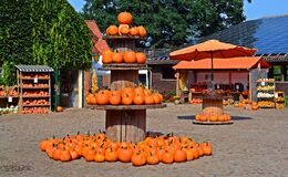 Pumpkin stand Stock Photography