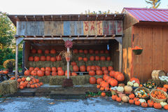 Pumpkin Stand Royalty Free Stock Photo