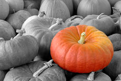 Pumpkin standing out of the crowd. A Vibrant pumpkin on top of a heap of black-and-white ones stock photo