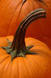 Pumpkin Stem Stock Images