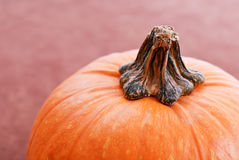 Pumpkin Stem Royalty Free Stock Image