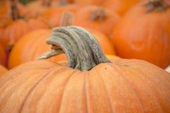 Pumpkin Stem Stock Photo