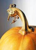 Pumpkin stem. Close up of a pumpkin stem Royalty Free Stock Photo
