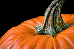 Pumpkin stem Royalty Free Stock Photography