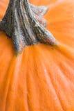 Pumpkin Stem Stock Photos