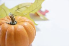 Pumpkin still life Royalty Free Stock Photos