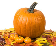 Pumpkin Still Life. Still life image with a pumpkin, small gourds, and fall leaves Stock Image