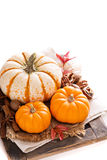 Pumpkin still life isolated on white Royalty Free Stock Photos