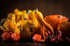 Pumpkin still life for Thanksgiving Royalty Free Stock Images