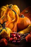 Pumpkin still life for Thanksgiving Royalty Free Stock Photo