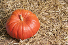 Pumpkin on straw Royalty Free Stock Images