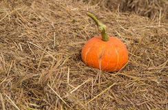 Pumpkin on the straw. Royalty Free Stock Photo