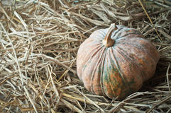 Pumpkin on straw closeup Royalty Free Stock Images