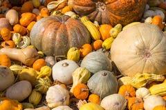 Pumpkin on straw in farm Royalty Free Stock Photos