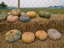 Pumpkin on the straw in farm. Stock Photography