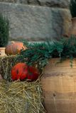 Pumpkin and straw near green thuja in front of stone wall. Halloween decoration stock images