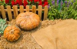 Pumpkin on straw. Royalty Free Stock Image