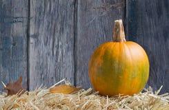 Pumpkin on Straw Royalty Free Stock Photo