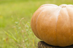 Pumpkin on a stump close up. With green grass on background Stock Photo