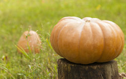Pumpkin on a stump Royalty Free Stock Images