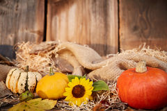 Pumpkin and sunflower autumn still life Stock Photo