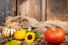 Pumpkin and sunflower autumn still life Stock Photos