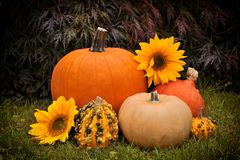 Pumpkin and sunflower Royalty Free Stock Photo