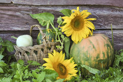 Pumpkin and sunflowers Royalty Free Stock Photos