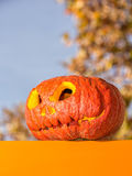Pumpkin in the sunlight Royalty Free Stock Photo