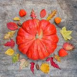 Pumpkin surrounded by autumn leaves. Fall concept. Flatly. Squar stock images