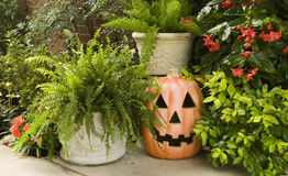 Pumpkin Surrounded by Green Plants. A Halloween Pumpkin surrounded by lush green plants Royalty Free Stock Photos