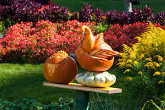 Pumpkin swan and Jack-O'Lantern Royalty Free Stock Photos