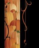 Pumpkin Swirl Stock Image
