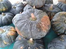 pumpkin texture for background Royalty Free Stock Photos