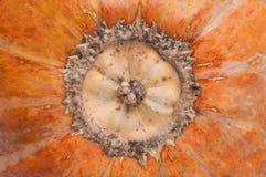 Pumpkin texture Stock Image