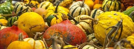 Pumpkin texture Stock Photos