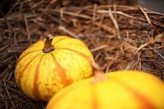 Pumpkin for thanksgiving Stock Image