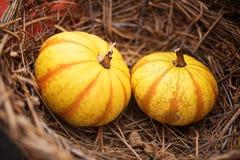 Pumpkin for thanksgiving Stock Photo