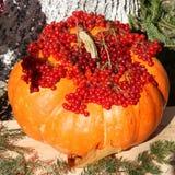 Pumpkin Thanksgiving Day Card - Stock Photos Stock Photos