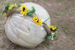 Pumpkin Thanksgiving Day Card - Stock Photos Stock Image