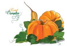 Pumpkin. Three big ripe pumpkin green pumpkin leaves Stock Image
