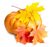 Pumpkin and three maple leaves on white background Royalty Free Stock Photo