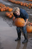 Pumpkin time Royalty Free Stock Photo