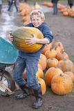 Pumpkin time. Young man holding a very big pumpkin royalty free stock images