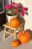 Pumpkin Time Royalty Free Stock Photos