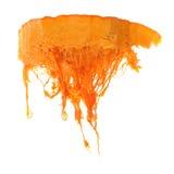 Pumpkin Top Royalty Free Stock Images