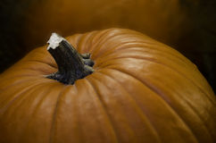 Pumpkin Top Royalty Free Stock Photography